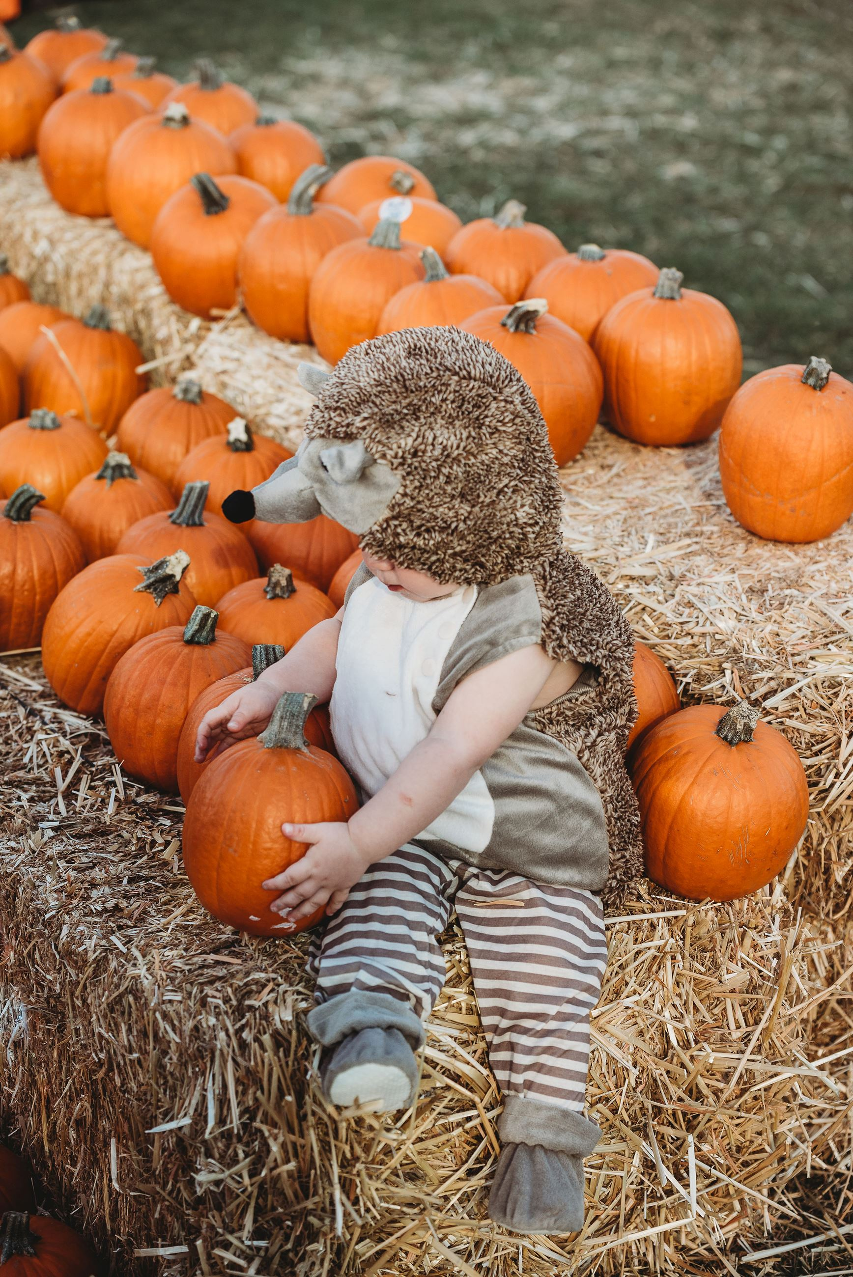 Baby Dressed as a Hedgehog Reaches for a Small Pumpkin